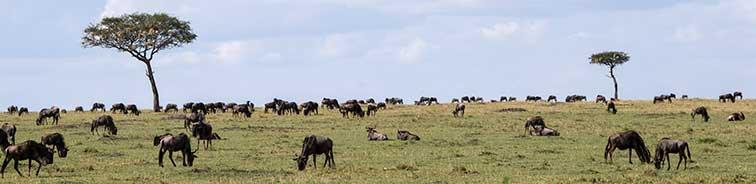 Fotoreise_Kenia_Fotosafari_Afrika_Masai_Mara_004