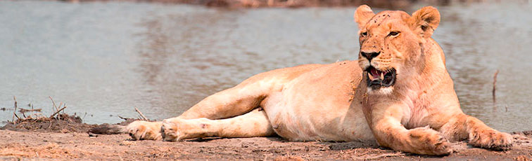 Fotoreise-Fotosafari-Botswana-Simbabwe-Afrika-206
