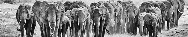Fotoreise_Fotosafari_Afrika_Botswana_Tansania_Kenia-Benny-Rebel_054