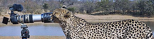 Fotoreise_Fotosafari_Afrika_Botswana_Tansania_Kenia_051