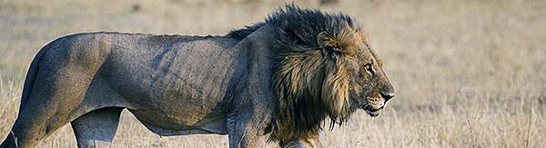 Fotoreise_Fotosafari_Afrika_Botswana_Tansania_Kenia_Benny-Rebel-007