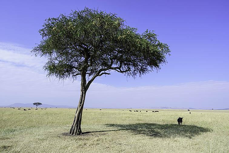 Landschaft-Masai-Mara-Fotoreise-Fotosafari_Kenia_DSC5396