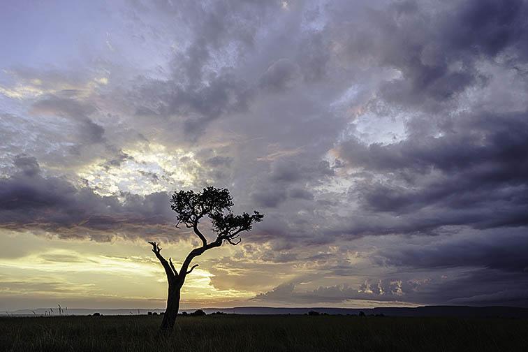 Landschaft-Masai-Mara-Fotoreise-Fotosafari_Kenia_DSC6379