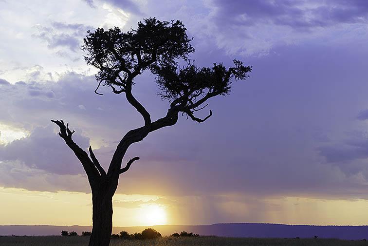 Landschaft-Masai-Mara-Fotoreise-Fotosafari_Kenia_DSC7822