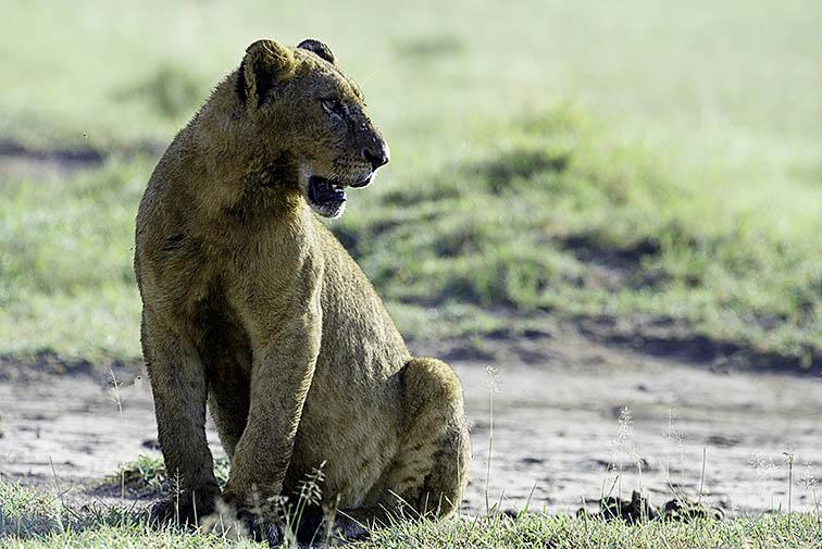 Loewe-Lake-Nakuru-Fotoreise-Fotosafari_Afrika_DSC5091