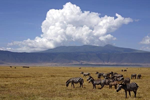 Foto-Abenteuer-Safaris mit Benny Rebel